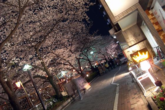 目黒川沿いの桜16