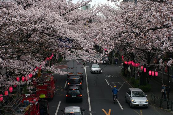 中野通り桜まつり 2