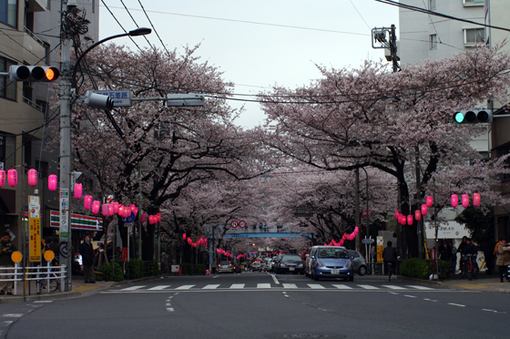 中野通り桜まつり 3