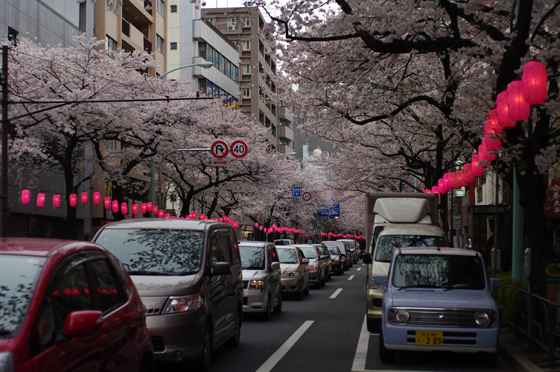 中野通り桜まつり 4
