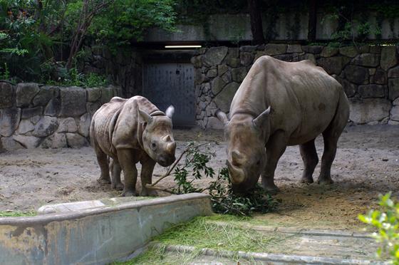 らふたぶ散策 上野篇 - 上野動物園