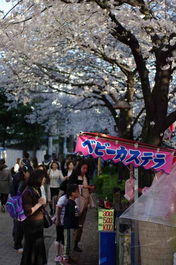 目黒川沿いの桜 2011 2