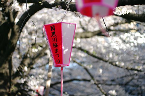 目黒川沿いの桜 2011 4
