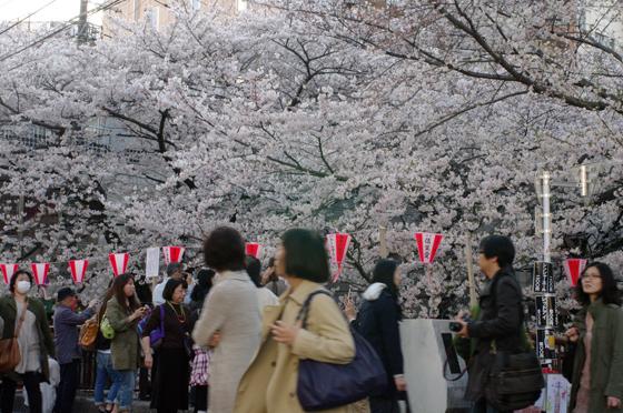 目黒川沿いの桜 2011 5