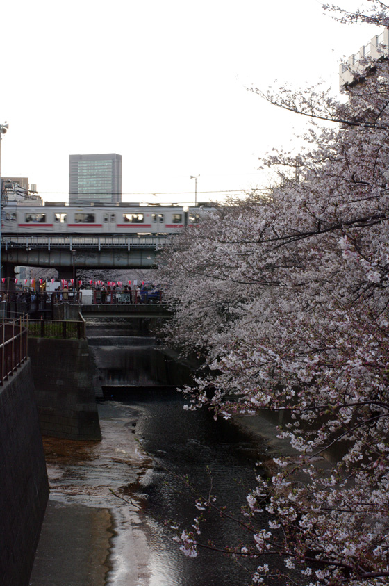 目黒川沿いの桜 2011 19