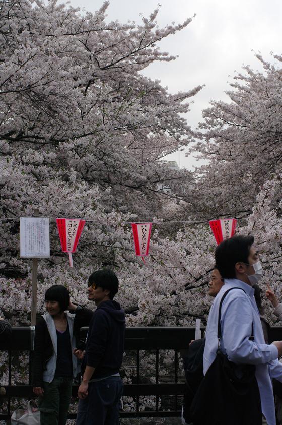 目黒川沿いの桜 2011 その2 3