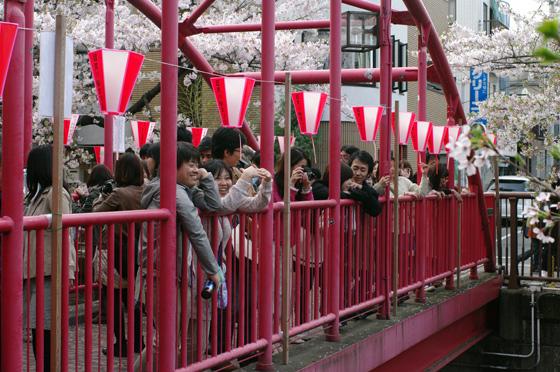 目黒川沿いの桜 2011 その2 4