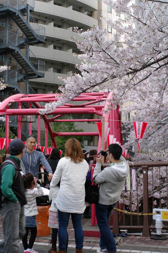 目黒川沿いの桜 2011 その2 7