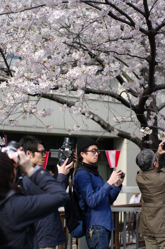 目黒川沿いの桜 2011 その2 8