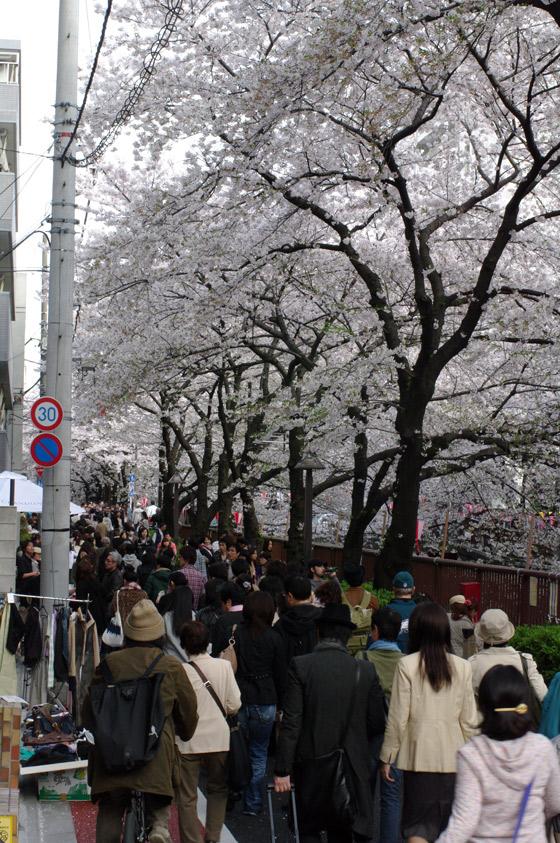 目黒川沿いの桜 2011 その2 9