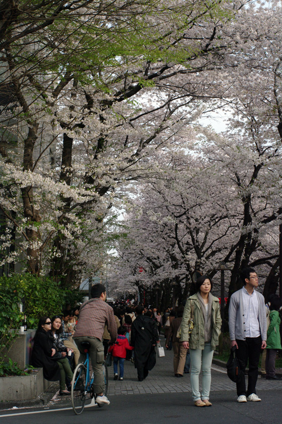 目黒川沿いの桜 2011 その2 11