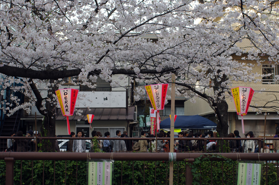 目黒川沿いの桜 2012