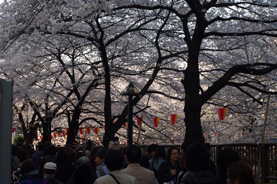 目黒川沿いの桜 2012 2