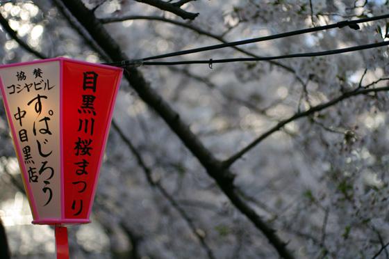目黒川沿いの桜 2012 4