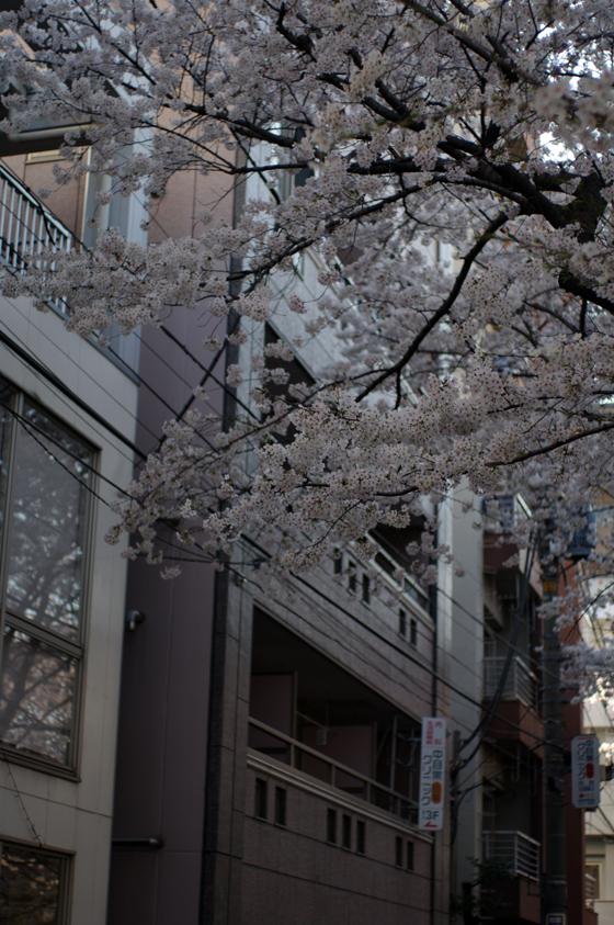 目黒川沿いの桜 2012 5