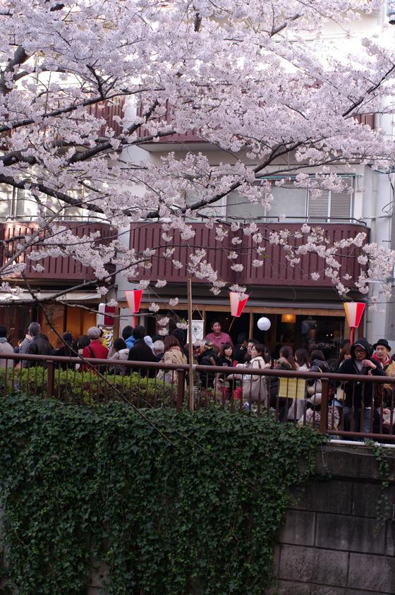 目黒川沿いの桜 2012 7