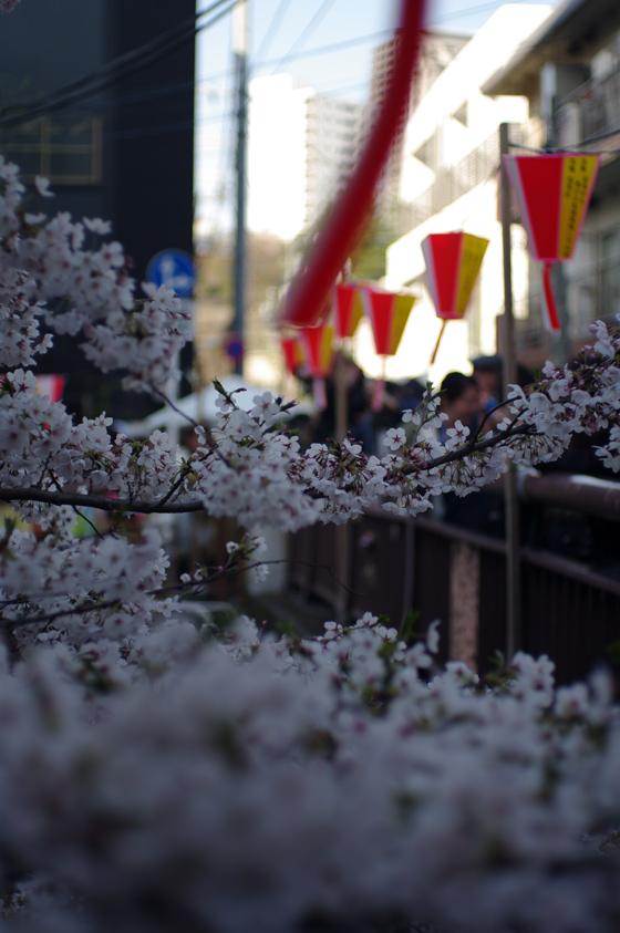 目黒川沿いの桜 2012 10