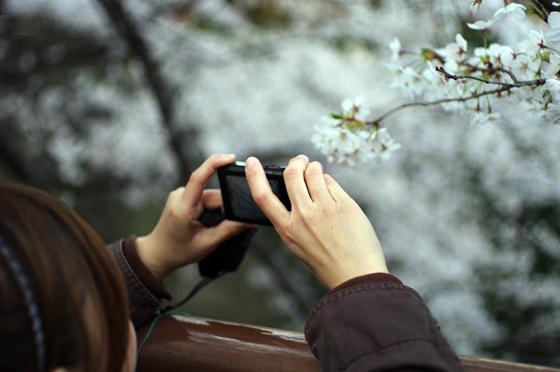 目黒川沿いの桜 2012 11