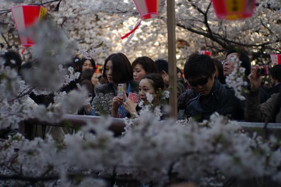 目黒川沿いの桜 2012 12