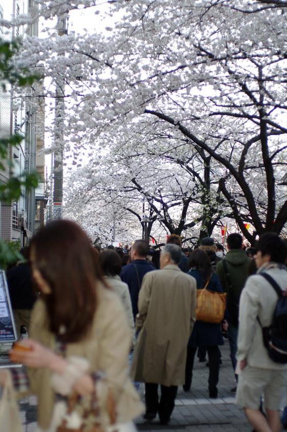 目黒川沿いの桜 2012 15