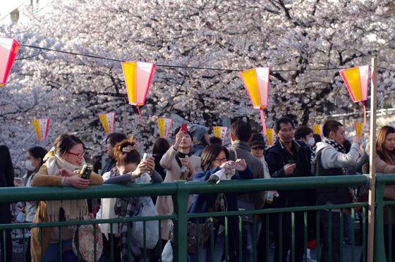 目黒川沿いの桜 2012 23