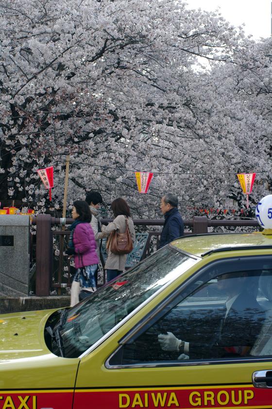 目黒川沿いの桜 2012 26
