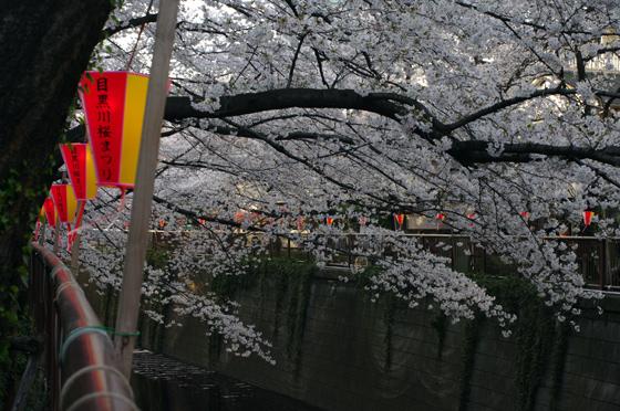 目黒川沿いの桜 2012 29