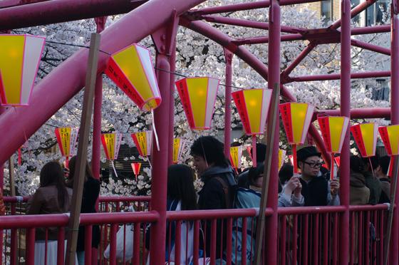 目黒川沿いの桜 2012 30