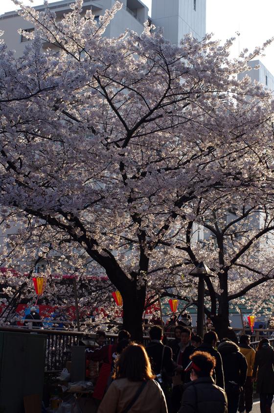 目黒川沿いの桜 2012 35