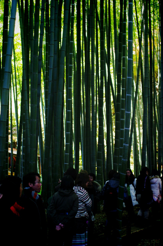 らふたぶ散策 鎌倉篇 - 報国寺 竹の庭 3