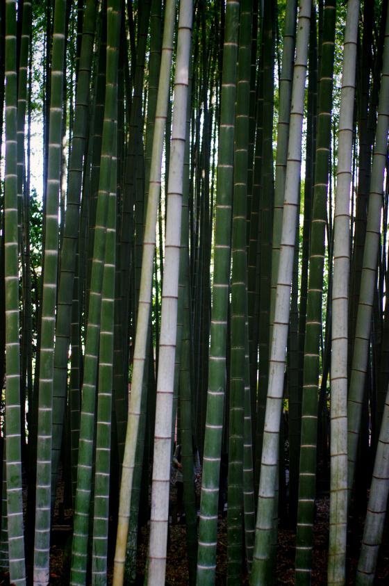 らふたぶ散策 鎌倉篇 - 報国寺 竹の庭 4
