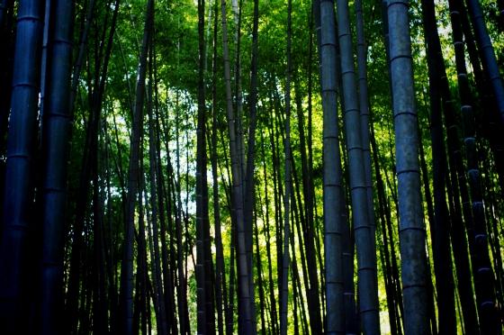 らふたぶ散策 鎌倉篇 - 報国寺 竹の庭 5