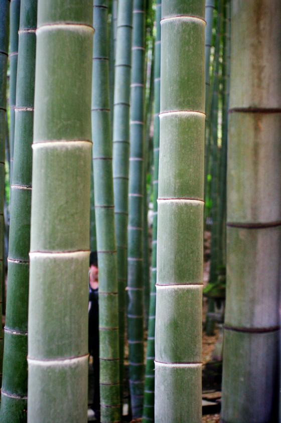 らふたぶ散策 鎌倉篇 - 報国寺 竹の庭 6