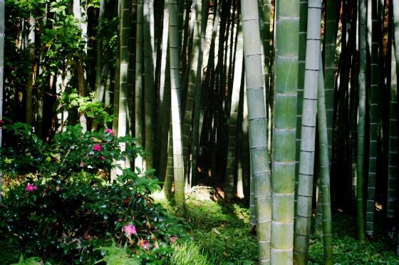 らふたぶ散策 鎌倉篇 - 報国寺 竹の庭 8