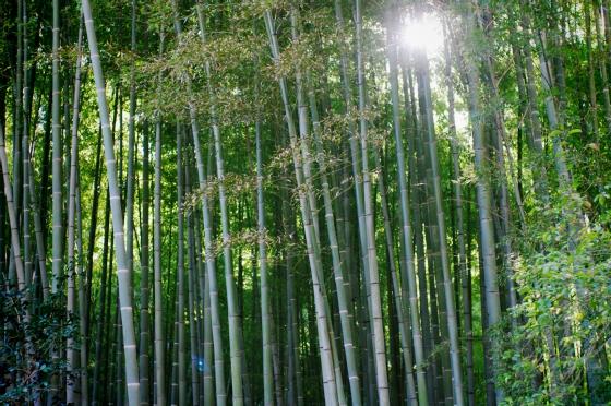 らふたぶ散策 鎌倉篇 - 報国寺 竹の庭 14