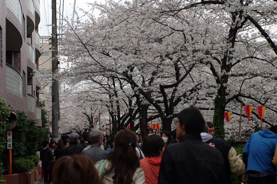 目黒川沿いの桜 2013 2