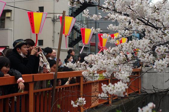 目黒川沿いの桜 2013 5