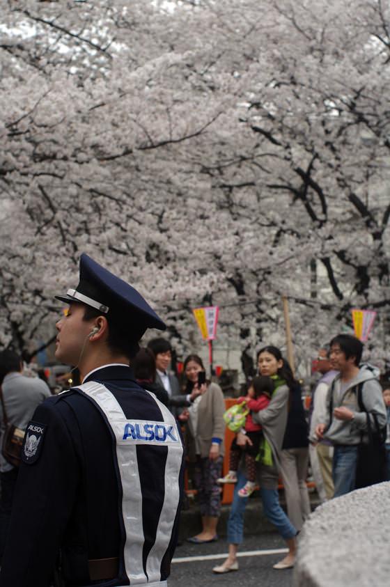 目黒川沿いの桜 2013 6