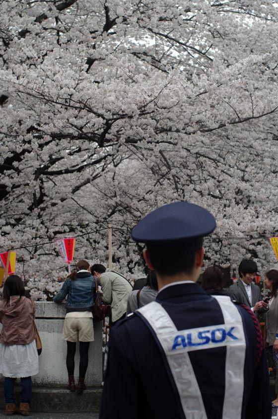 目黒川沿いの桜 2013 7