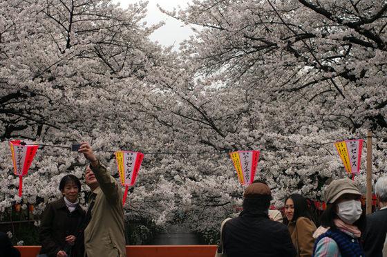 目黒川沿いの桜 2013 8