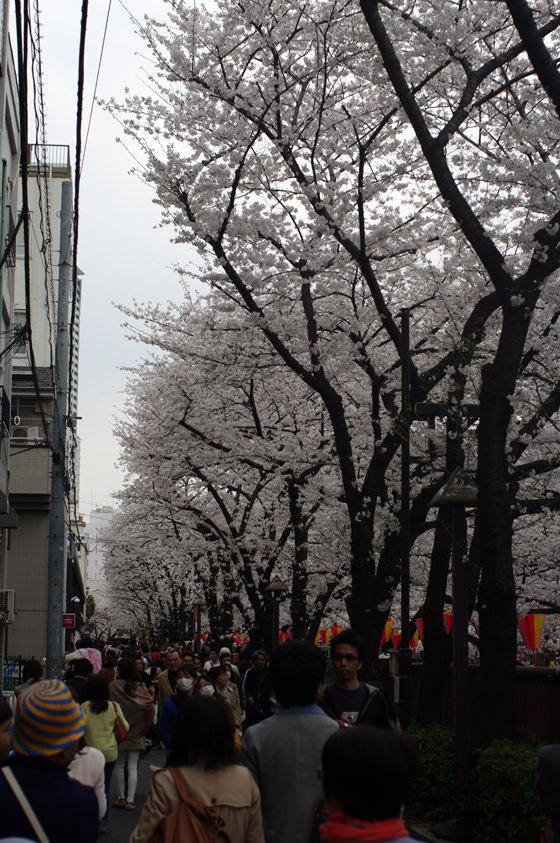 目黒川沿いの桜 2013 10
