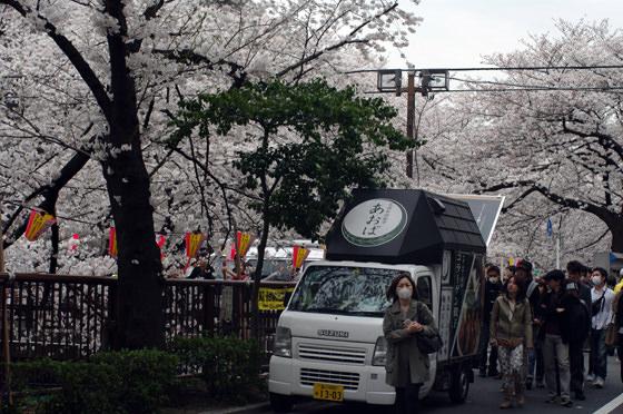 目黒川沿いの桜 2013 15