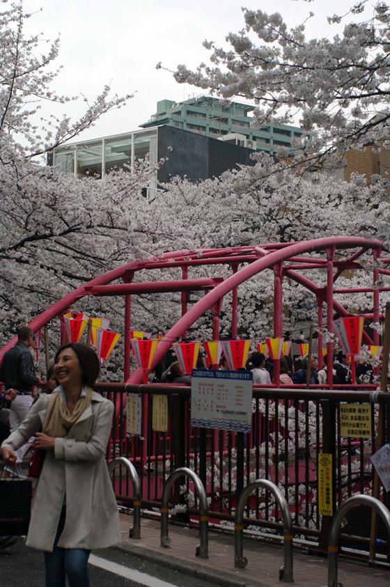 目黒川沿いの桜 2013 17
