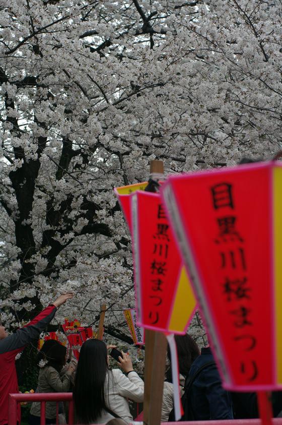 目黒川沿いの桜 2013 18