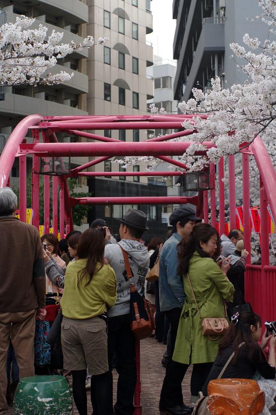 目黒川沿いの桜 2013 20