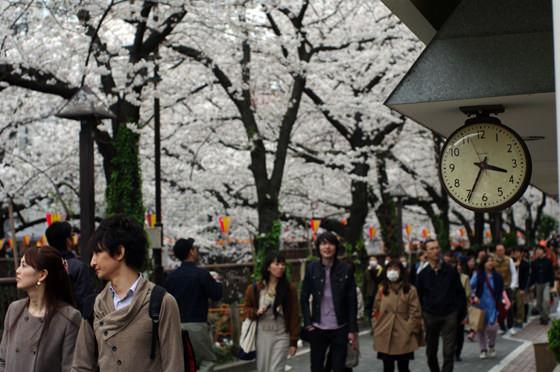 目黒川沿いの桜 2013 24