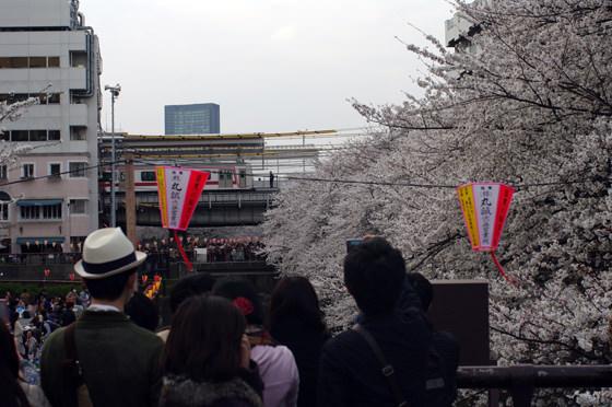 目黒川沿いの桜 2013 29
