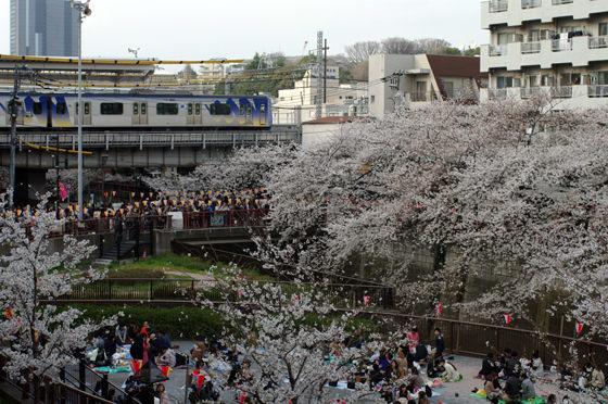 目黒川沿いの桜 2013 30