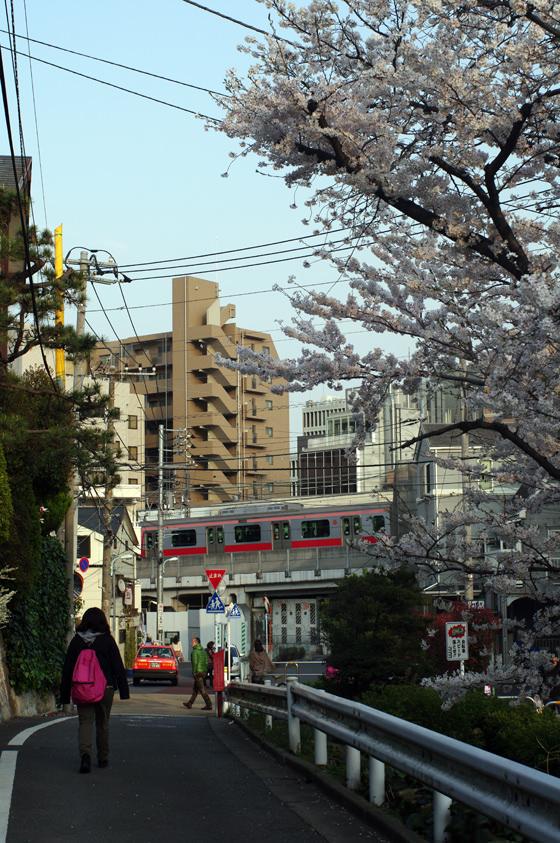 目黒川沿いの桜 2013 34