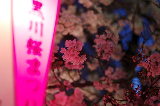 目黒川沿いの桜 2014